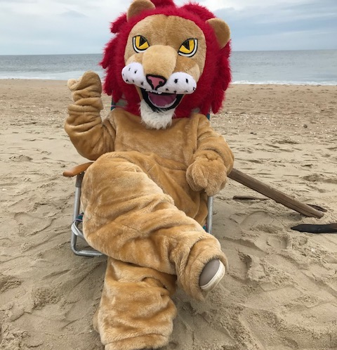 Lions at the Beach